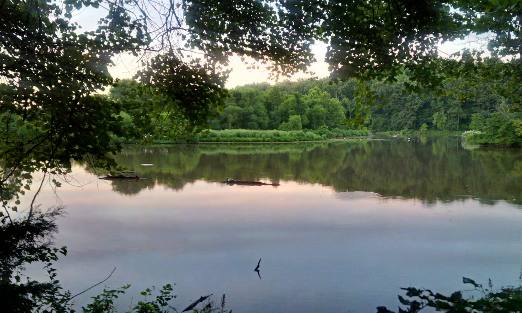 FLAP - Friends Of Lake Accotink Park